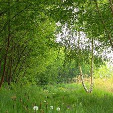 1. Natuurbeelden Bos