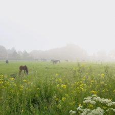 7. Natuurbeelden Weiland