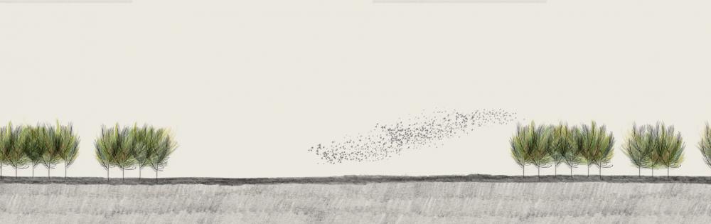 11. Animatie Zwerm vogels