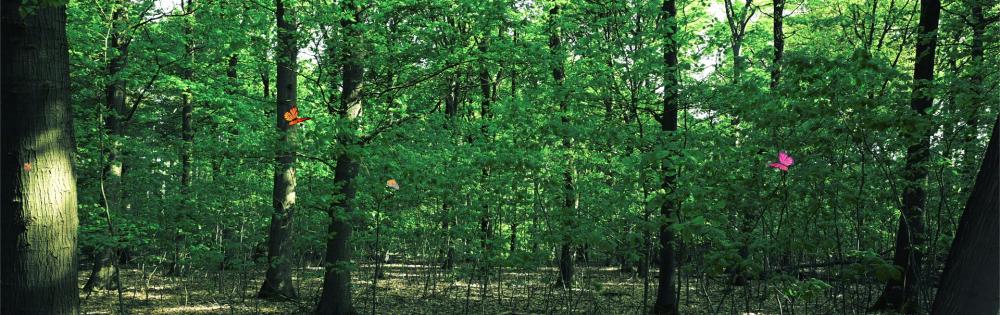 9. Natuurbeelden Vlindertuin
